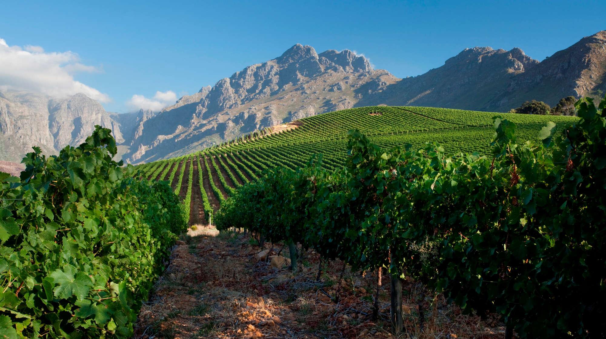 Stellenbosch South Africa S Leading Wine Region Latte